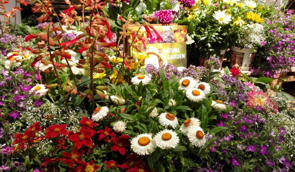 Blühende Pflanzen Im Winter
